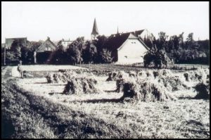 Getreideernte Ennigerloh
